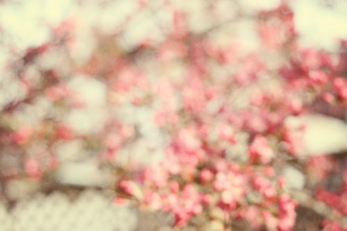 Blurry-tree