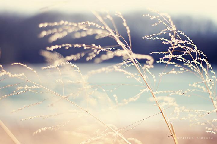 Waving weeds blog