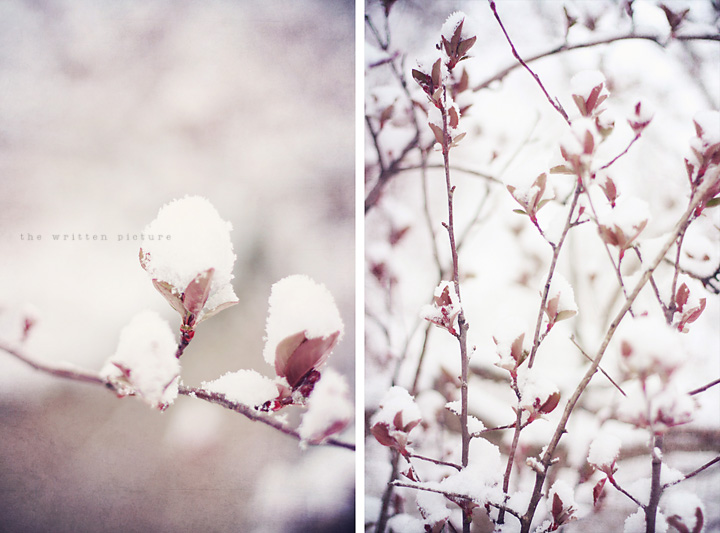 Snow flowers blog 3