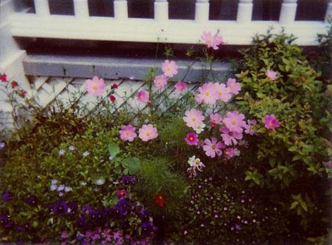 Polaroid-004-cropped