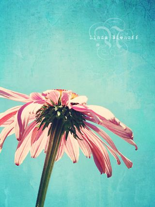 The-Lone-Flower