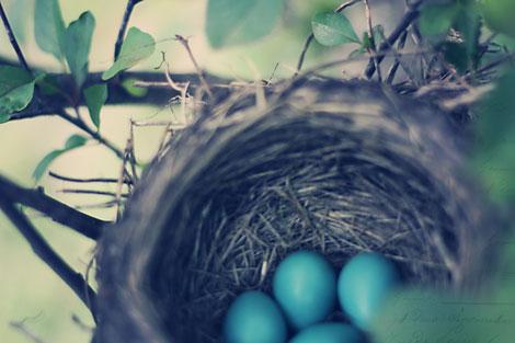 Birdeggs